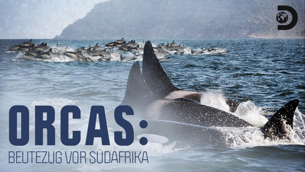 Orcas.Beutezug.vor.Suedafrika.2014.German.DOKU.1080P.WebHD.H264-GWD